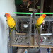 Birdy bookends by alia_801