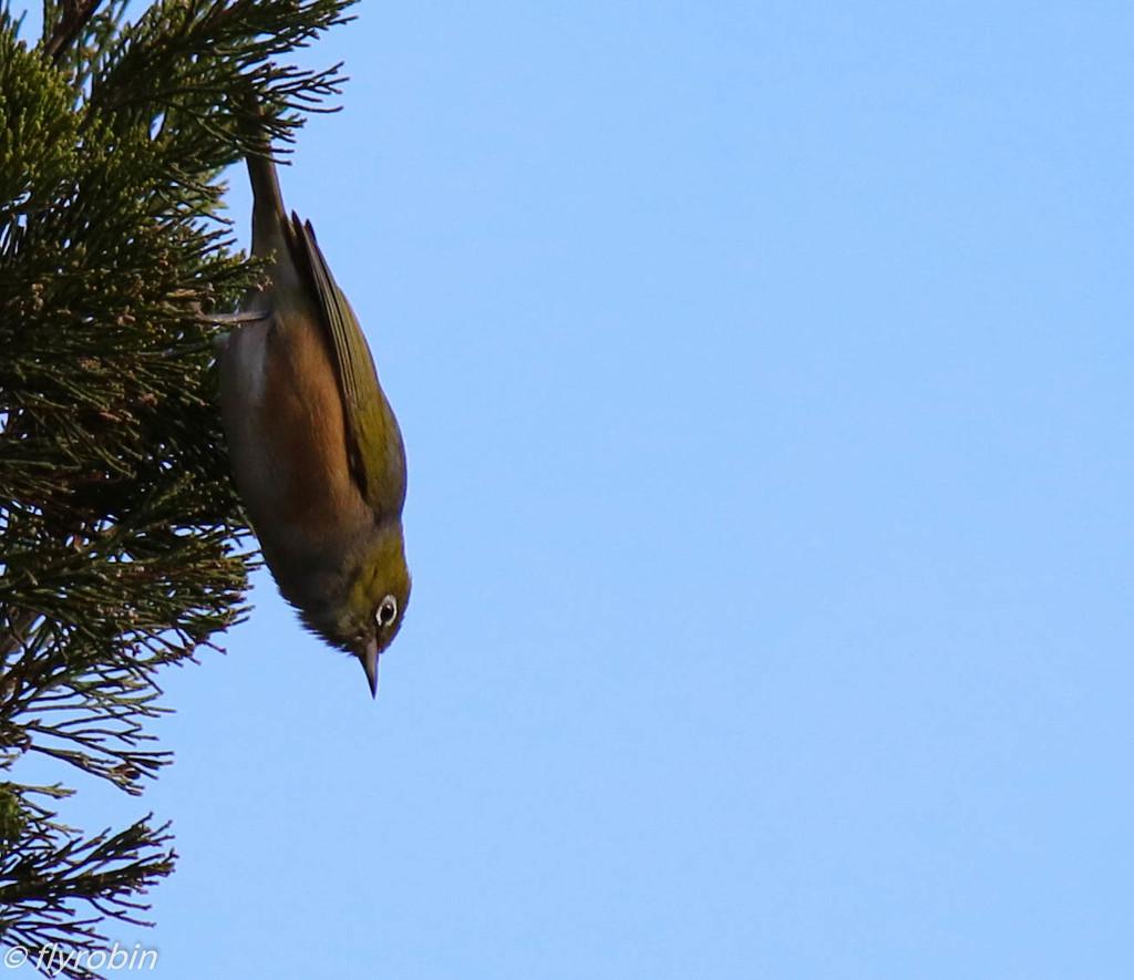 On the edge by flyrobin