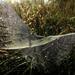 One Odd Spiderweb by milaniet