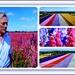 Confetti fields ! by beryl