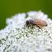 The Little Bee! by fayefaye