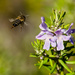 Bee Flying, tick the bucket list! by salza