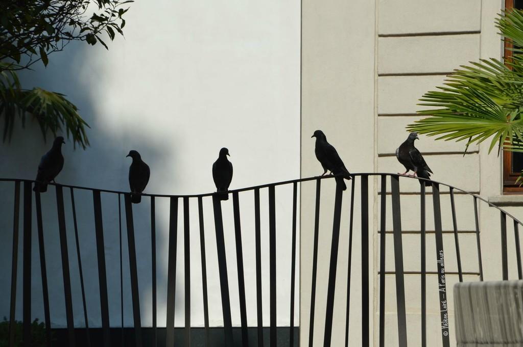 Pigeons by parisouailleurs