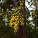 Zig-zag wattle tree. by happysnaps