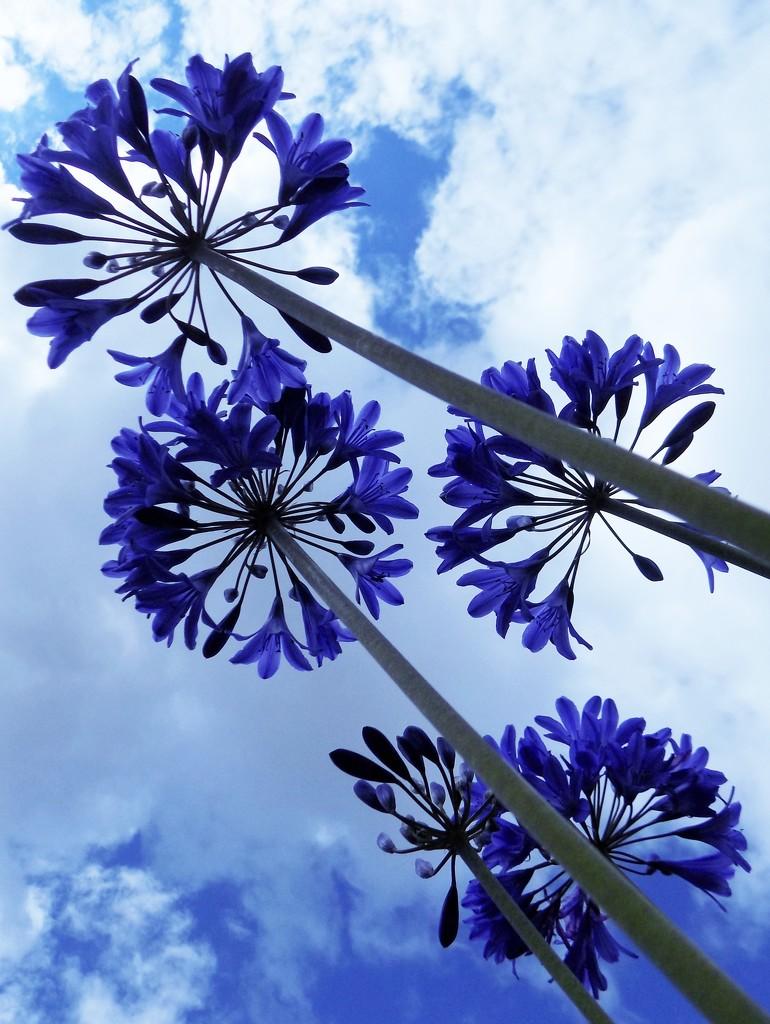 Blue by flowerfairyann
