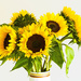 28th July 2015    - Sunflowers by pamknowler