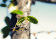 30th Jul 2015 - 4: leaves of green