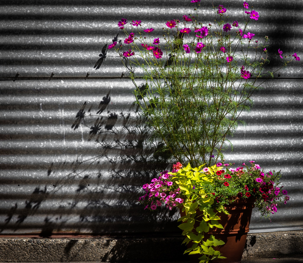 Shadows and Flowers by epcello