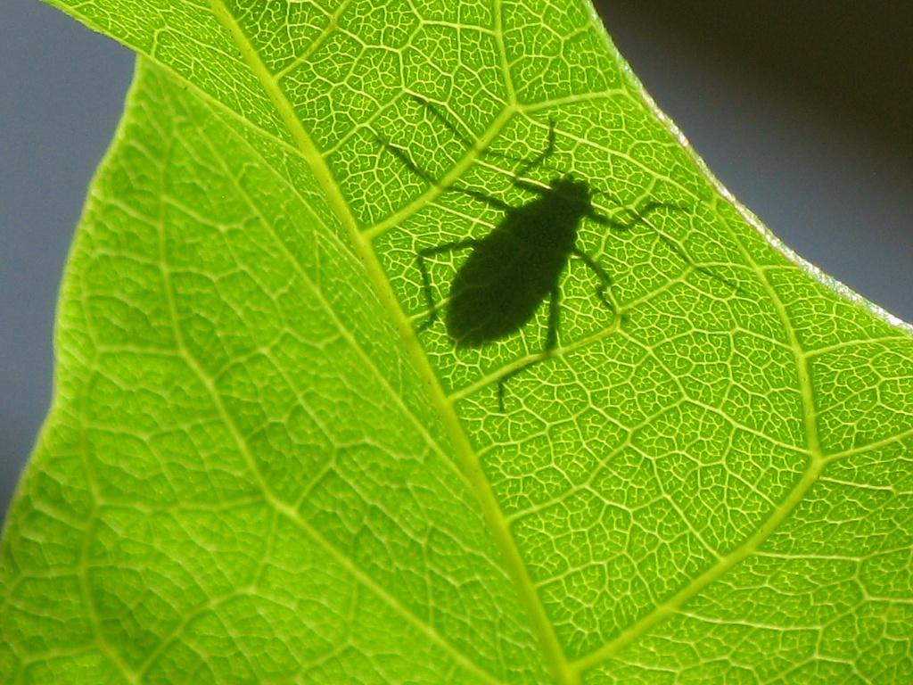 Bug shadow by loey5150