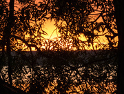 31st Jul 2015 - Nature's Stained Glass