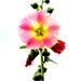 Pretty in PINK! by fayefaye