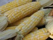 31st Jul 2015 - First Corn of the Season