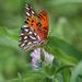 I heart butterflies by cjwhite