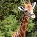 Stretch the Giraffe by homeschoolmom