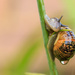 2015 08 02 - Soggy Snail by pixiemac
