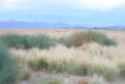 3rd Aug 2015 - desertscape