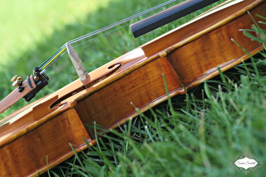 Violin by sarahlh