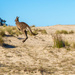 Skippy the Beach Kangaroo by pusspup