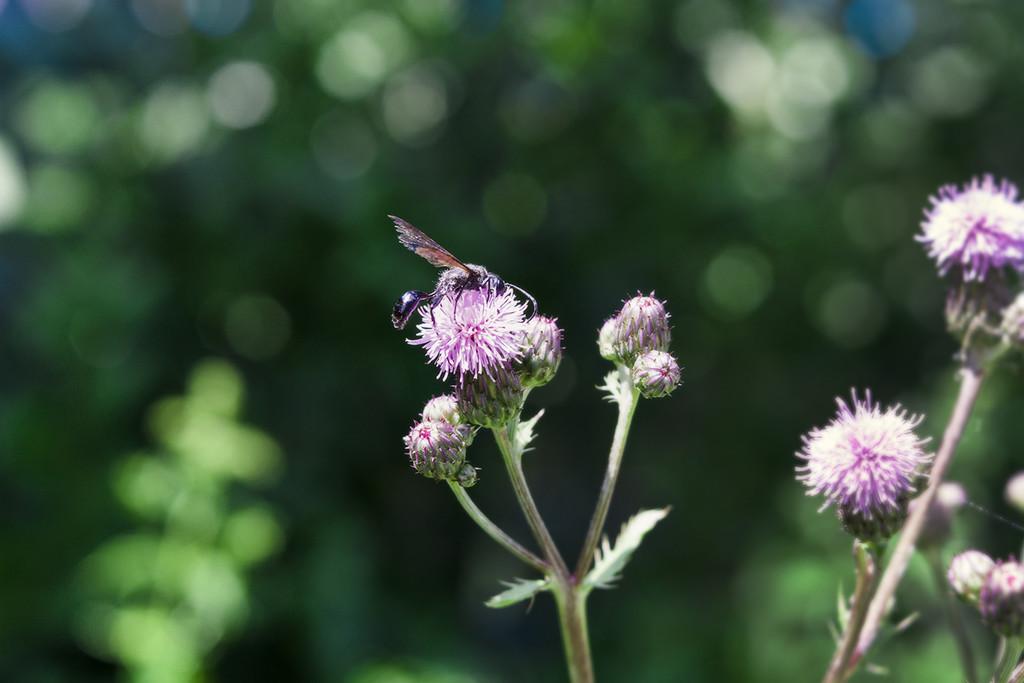 Black Wasp by gardencat