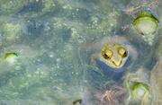 6th Aug 2015 - What Lurks Beneath the Pond Scum