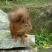 my little squirrel friend by shirleybankfarm