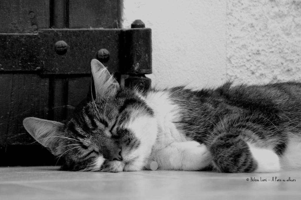 Nap on the floor by parisouailleurs