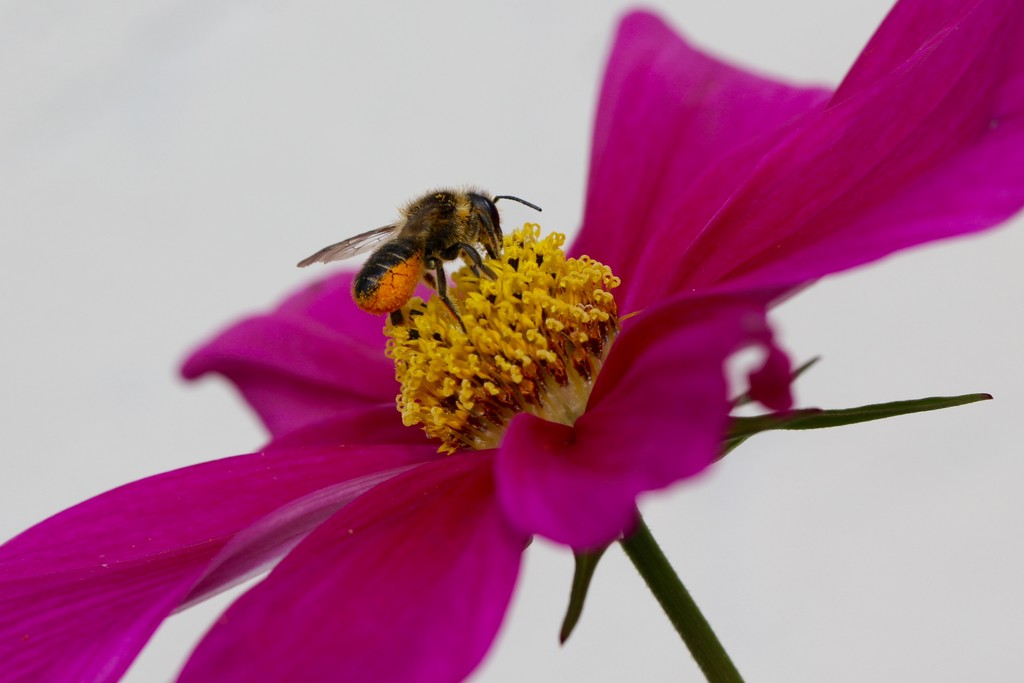 Busy Bee! by chris17