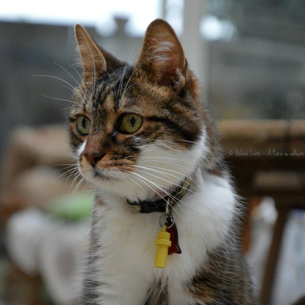 International Cat Day! by parisouailleurs