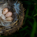 Three Speckled Eggs by ckwiseman
