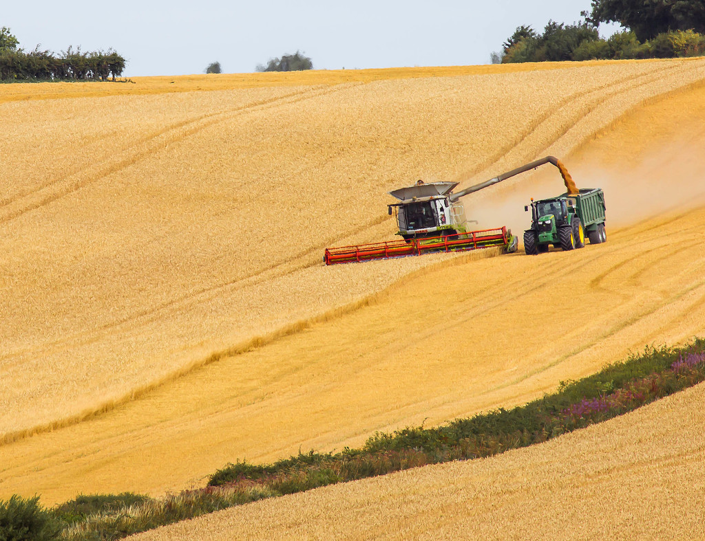 9th August 2015    - The Harvest Begins  by pamknowler