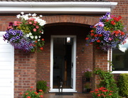 8th Aug 2015 - My Hanging Baskets