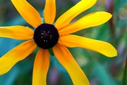 9th Aug 2015 - yellow