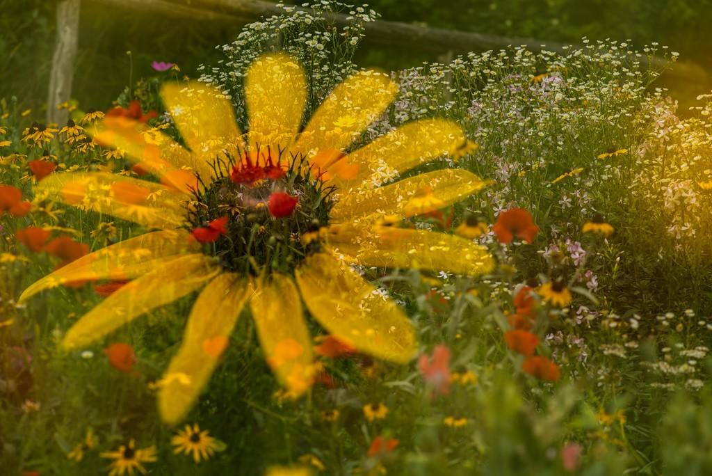 Garden Star by taffy