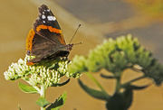 10th Aug 2015 - Rushing by the butterfly
