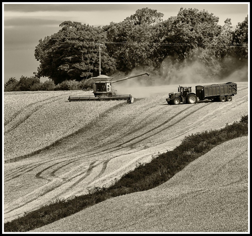 11th August 2015    - Harvesting by pamknowler