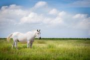 11th Aug 2015 - White Horse