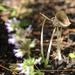 Little mushroom by loweygrace