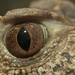 Eye of the Caiman by leonbuys83