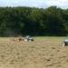 Hive of activity by shirleybankfarm