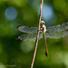 Raggedy wings by mccarth1
