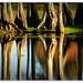 The Trunks... by julzmaioro