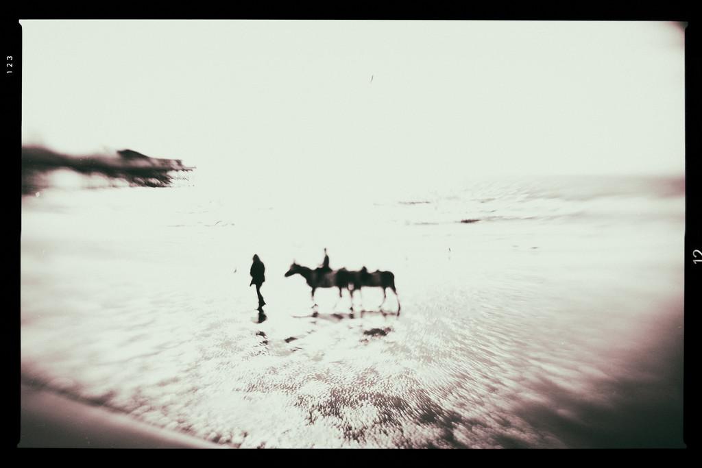 Blackpool Donkeys by jocasta