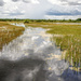 Wetlands by danette