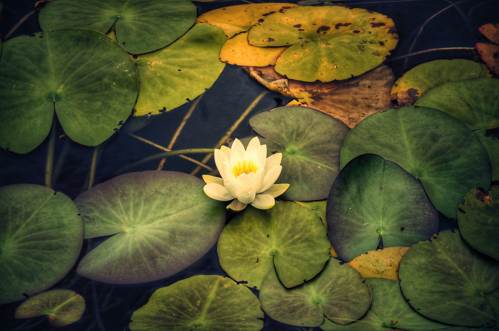 late evening at the lily pond by jack4john