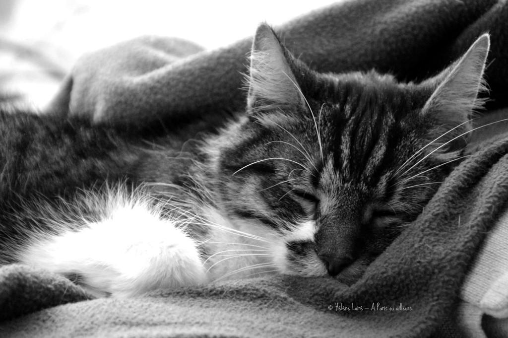 big nap by parisouailleurs