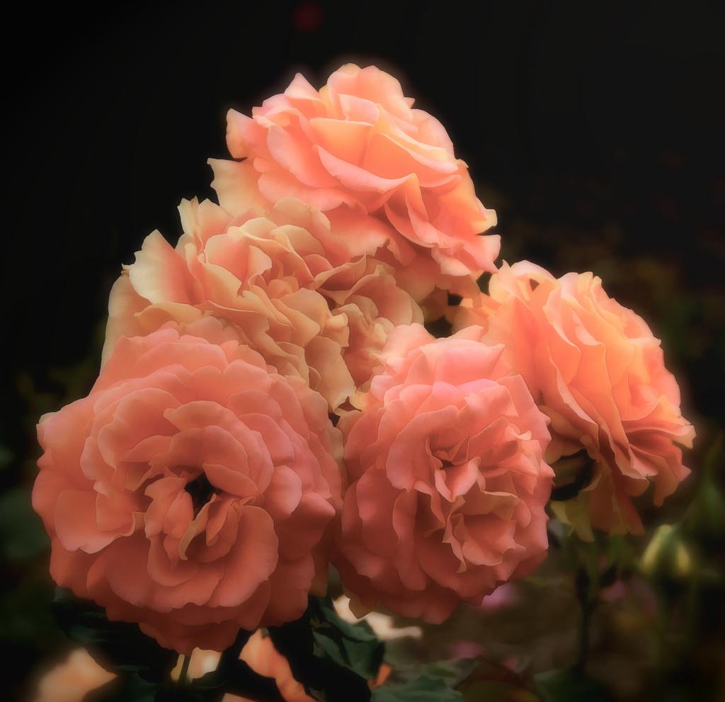 The Rose Garden by joysfocus