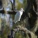Egret, Audubon Swamp Garden, Charleston, SC by congaree