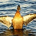 Auditioning For Jesus Christ Super-Duck The Musical by moviegal1