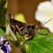 Grasshoppers Galore by frantackaberry
