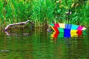 17th Aug 2015 - Brolly boat